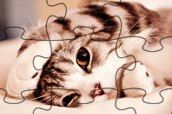 Lovely Cats Jigsaw oyunu